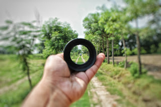 a lens focusing in an orchard
