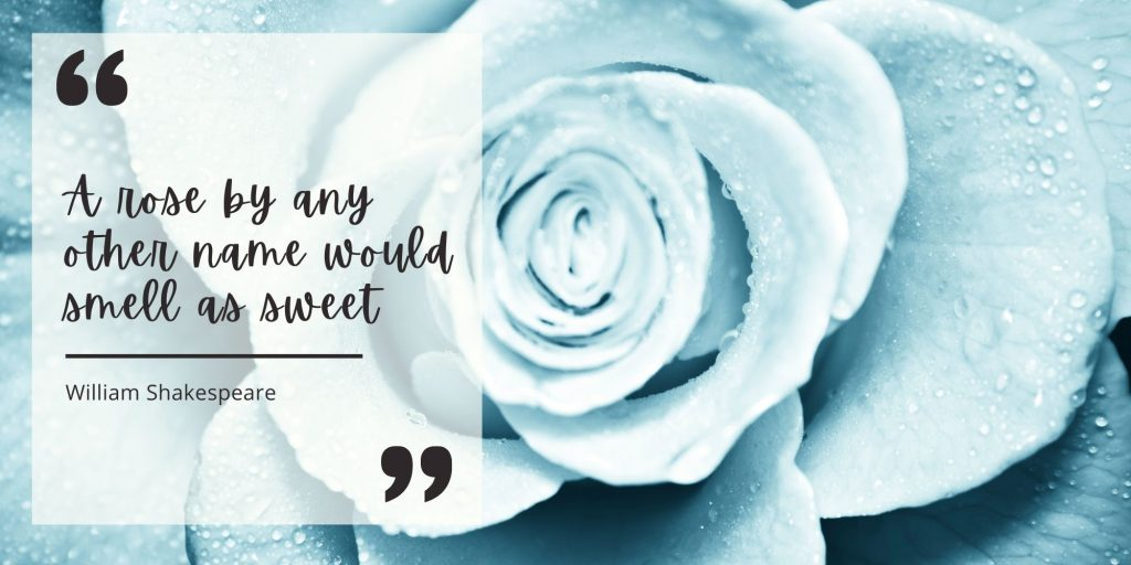 light blue rose and quote from Shakespeare